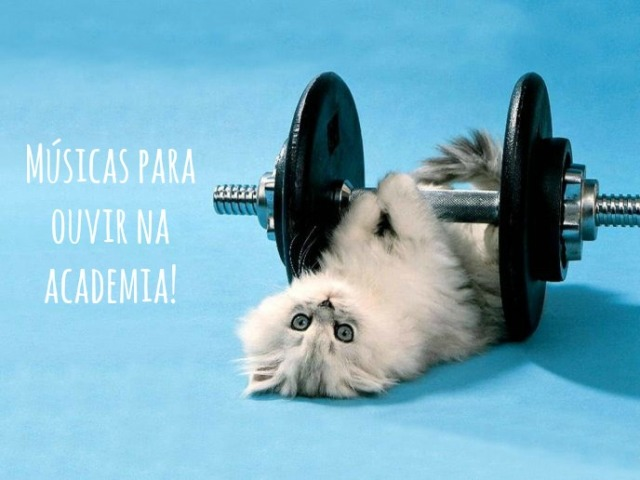 5920_Fluffy-cat-at-the-gym-funny-HD-wallpaper